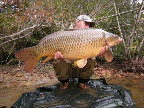 Carp, The Next Big Thing for U.S. Anglers? Recommended by http://www.fishinglondon.co.uk/