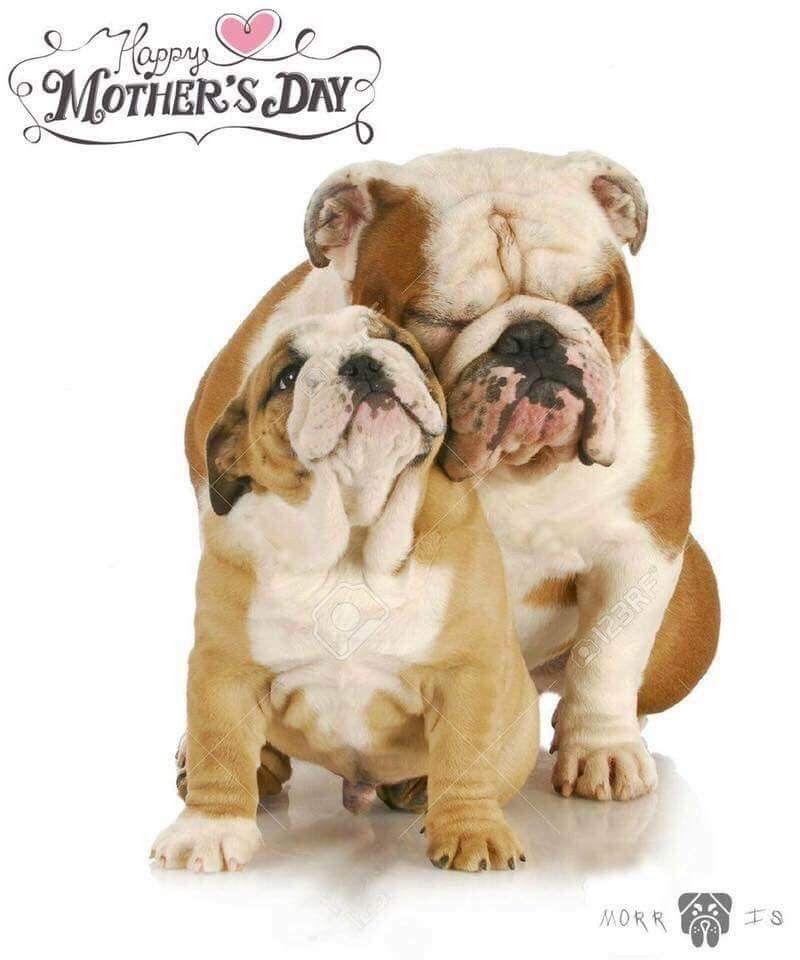Pin By Beth Randolph On Bulldogs Dogs Bulldog Puppies Old
