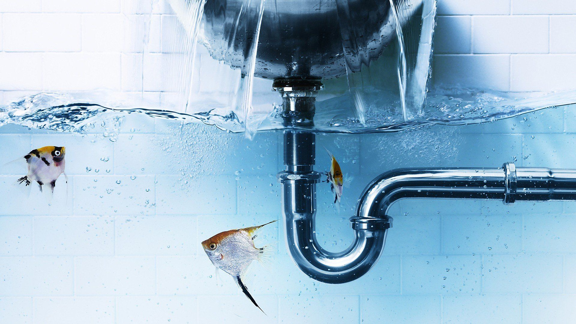 water fish bathtubs underwater split view | Split View III ...