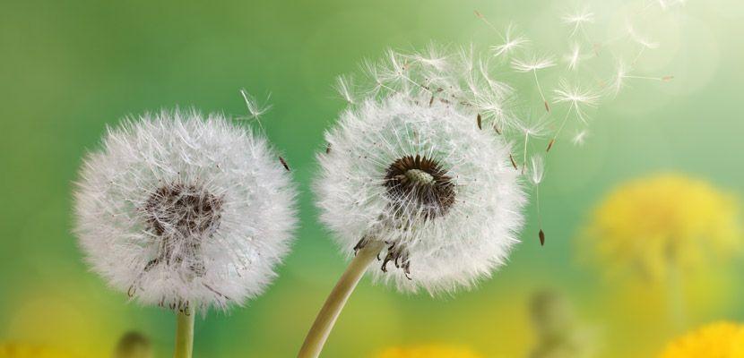 Www Pollen Com National Allergy Map For Seasonal Allergy Sufferers Sensitive Skin Care Sensitive Skin Care Routine Sensitive Skin Treatment