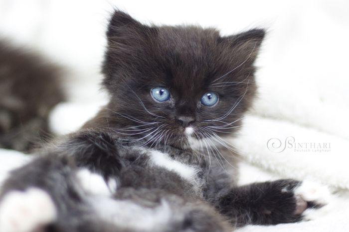 Pin von Svetlana Fisherrtin auf cats Katzenbabys, Süße