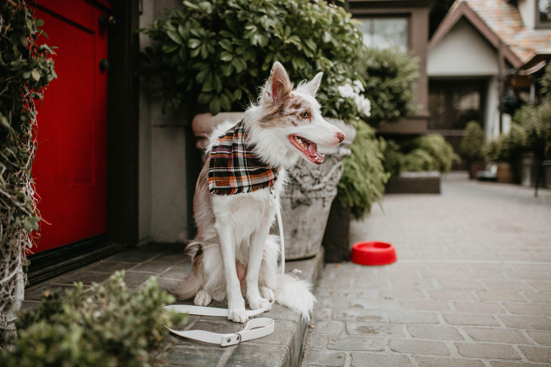 Hoot And Co Pet Bandana Dog Bandana Plaid Bandana Frayed Dog Bandana Pet Lover Gift Scarf Bandana Set Match My Dog Flannel Bandana Dog Supplies Online