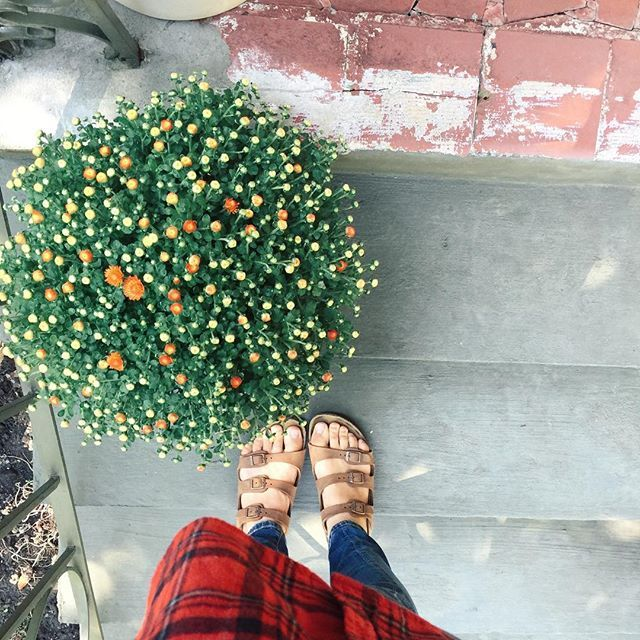 The front steps are getting ready for fall which means mums, mums, and more mums! + flannel for me. #mumstheword #flannel #hellofall