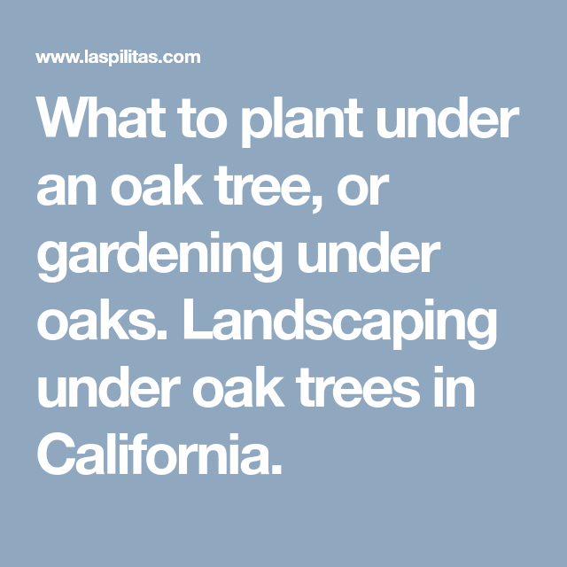 The Arbors At California Oaks: What To Plant Under An Oak Tree, Or Gardening Under Oaks