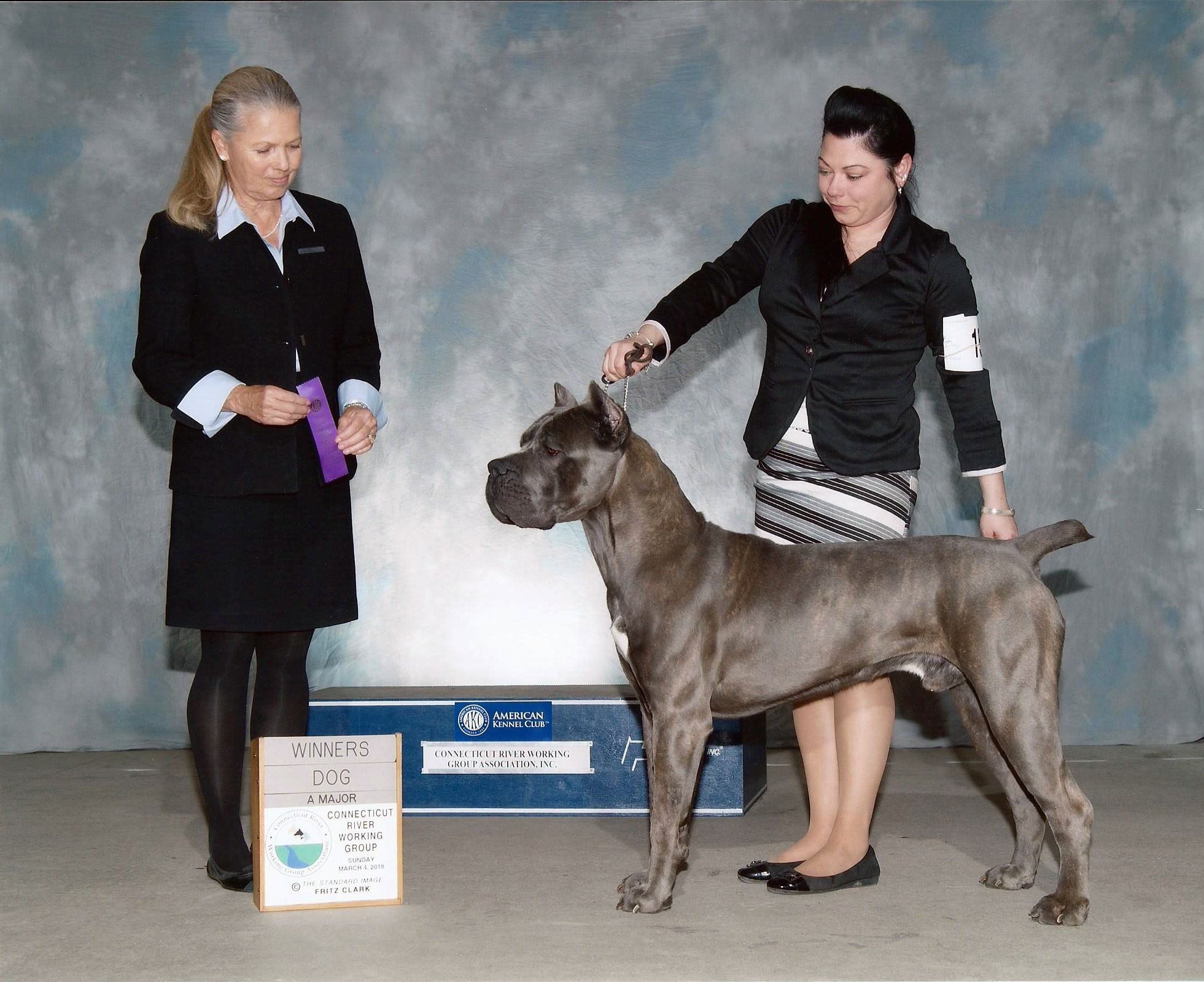 Ch Pridenjoyz Maple Thor Aka Thorin Cane Corso Handled By