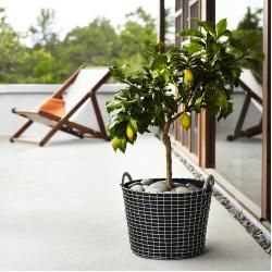 Photo of Wire baskets