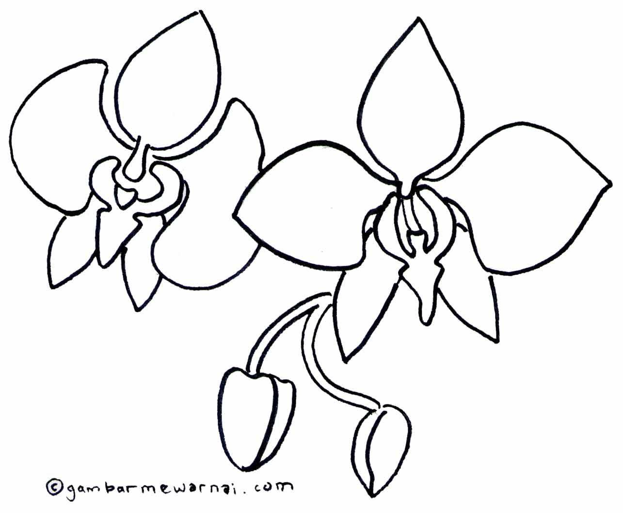 Mewarnai Bunga Anggrek