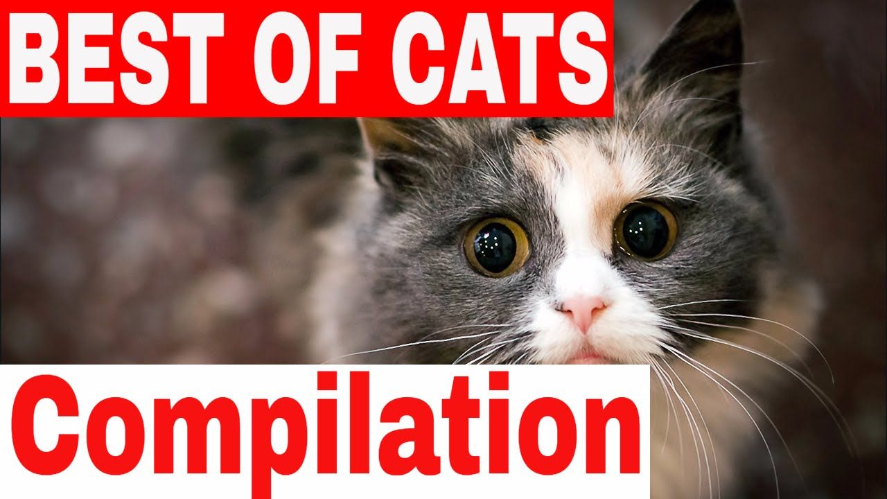 Uncategorized Very Funny Cats Videos funny cats 2017 a cat videos compilation new in hd