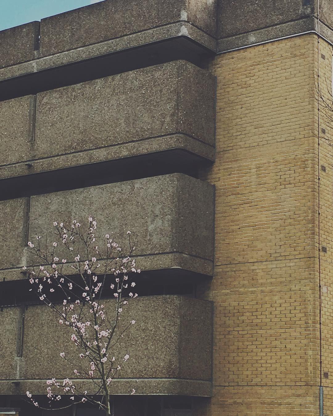 Poplar Modernism Architecture Brutalism Spring Flowers London