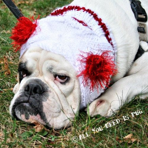 Custom Snuggly Dog Hat for Large Breeds by AllYouNeedIsPugShop, $30.00