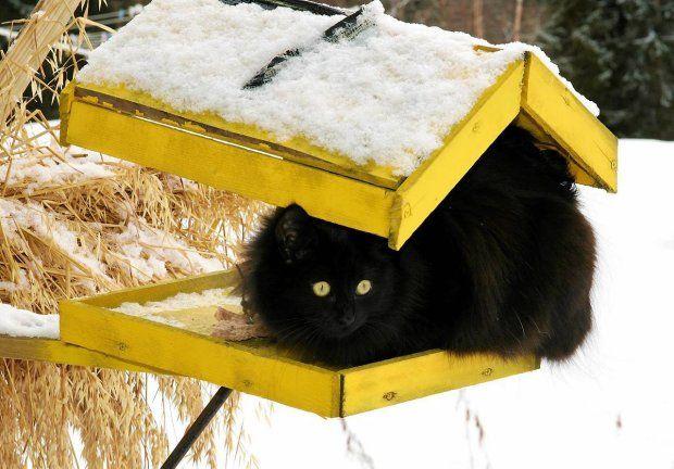 in the garden: bird feeder? no, cat feeder...