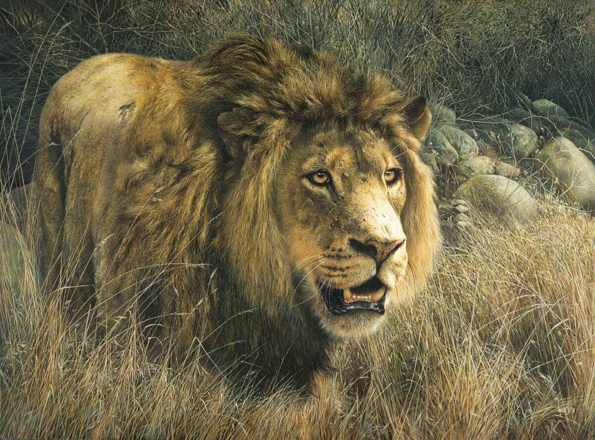 Denis Mayer Wildlife paintings, Wildlife artists