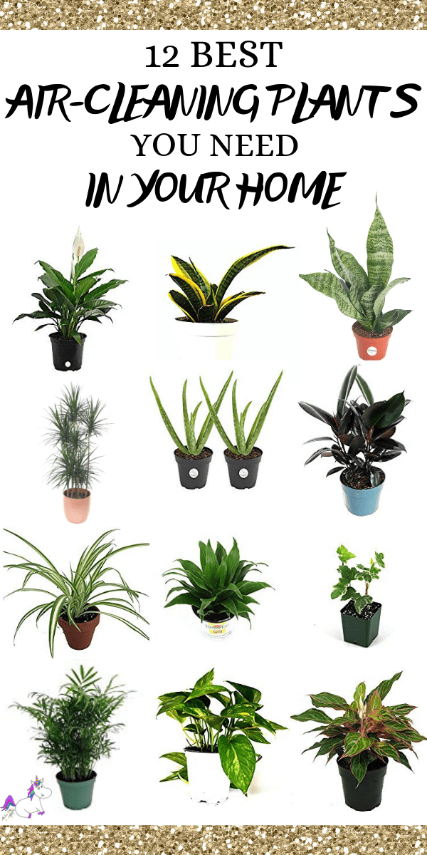 12 Best Air Cleaning Houseplants That Are Impossible To Kill! (no green thumbs needed) -   16 plants Green projects ideas