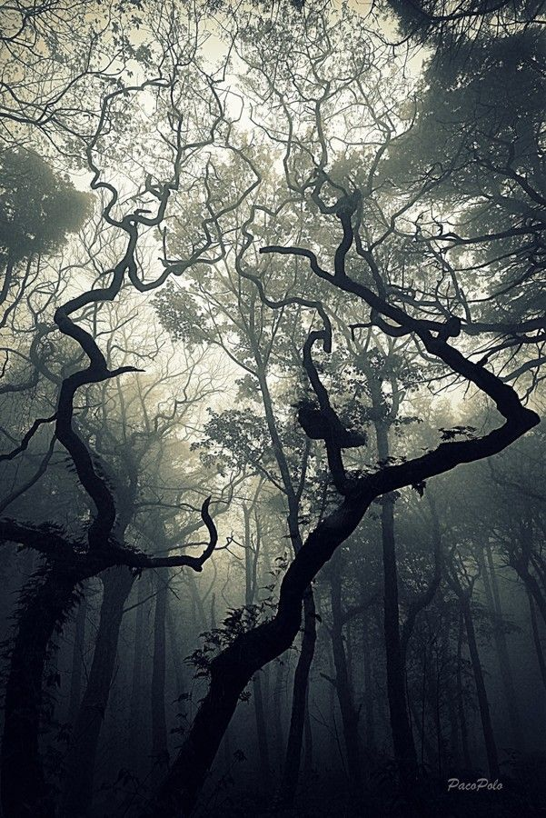 Bosque Misterioso Forest Photography Strange Photos Nature Photography