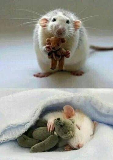 Everybody needs a teddy bear !