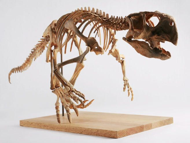 'Parrot dinosaur' walked on all fours, then graduated to two (+video). New research suggests that Psittacosaurus, the 'parrot dinosaur,' walked on four feet – and then two feet – some 100 million years ago in what is now China.