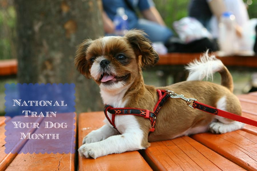 January Is National Train Your Dog Month Personalized Dog