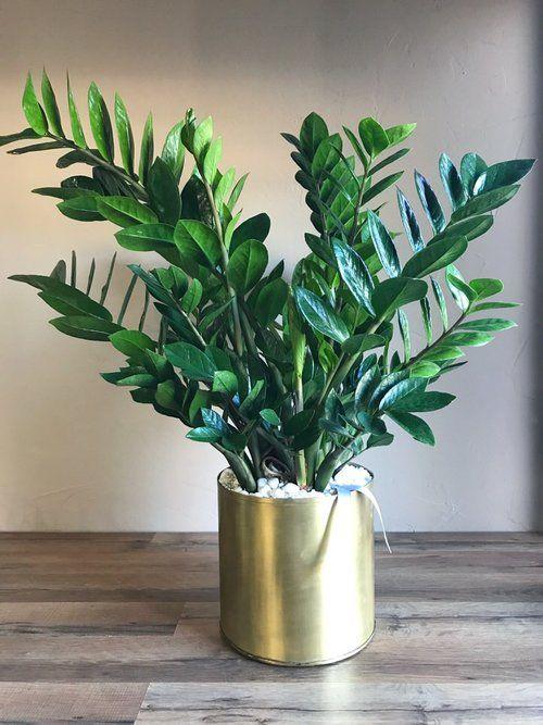 14 Houseplants That Thrive In Low Light Plants Indoor 400 x 300