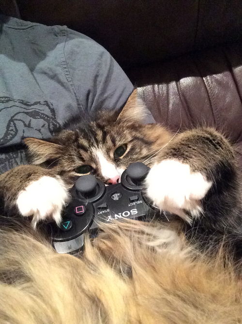 Meow cute  #cat