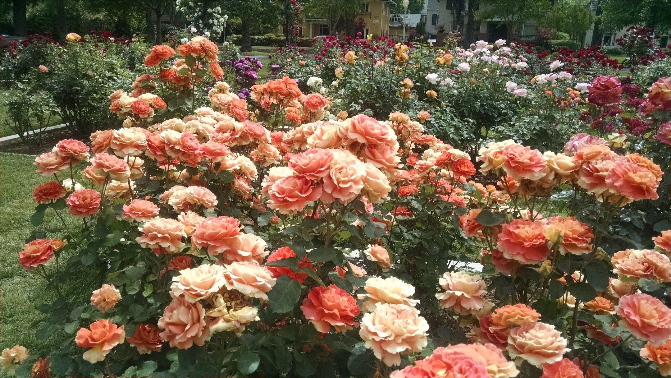Mckinley Park Rose Garden Sacramento Floral Wreath Mckinley