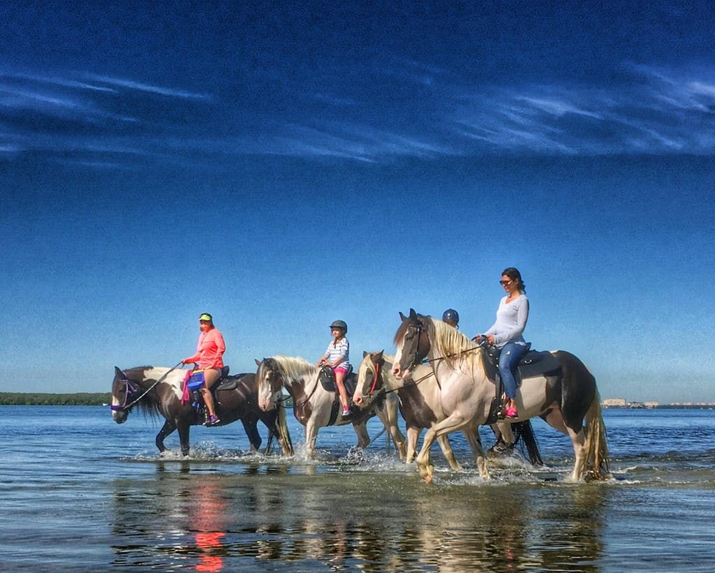 Bradenton St Petersburg Florida Beach Horseback Riding Ride Our Majestic Drum And Gypsy Vanner Horses Fulfill A Lifetime Dream