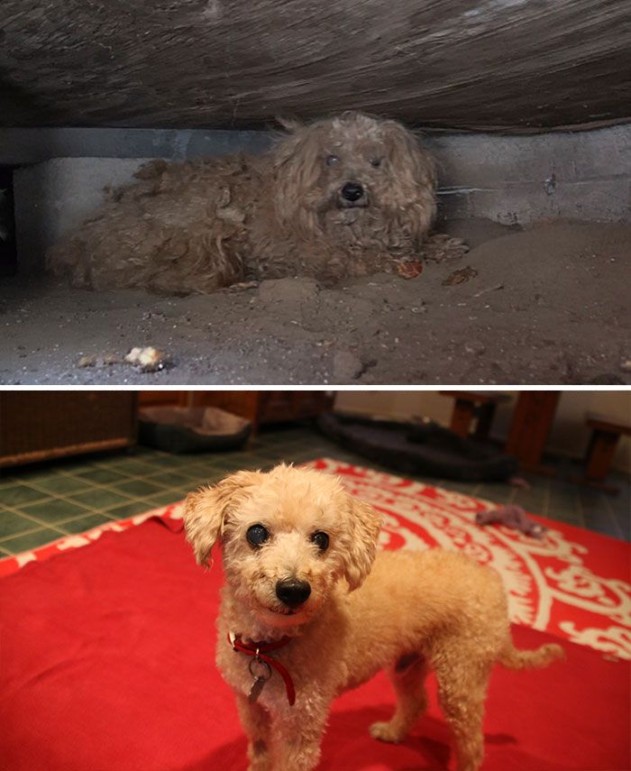 http://www.boredpanda.com/before-and-after-rescued-dogs/