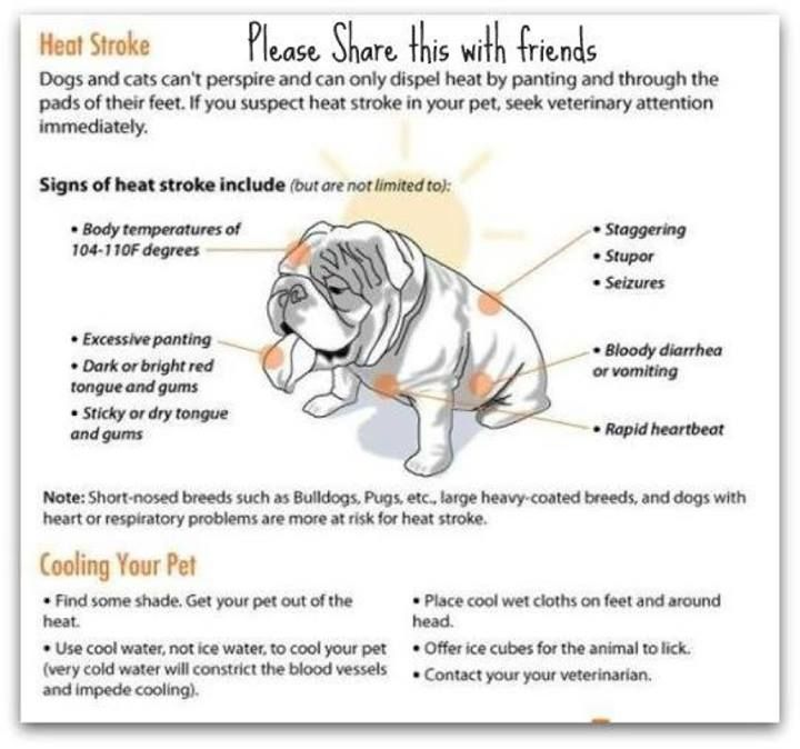 Heatstroke In Your Pet Bulldogs Overheat All Pets Can Have