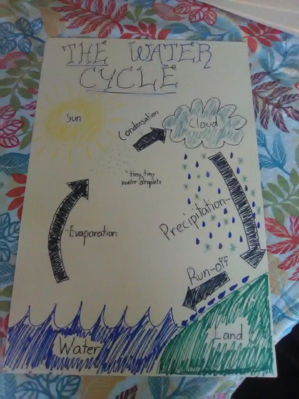 Water cycle diagram for kids on poster board. in 2020 ...