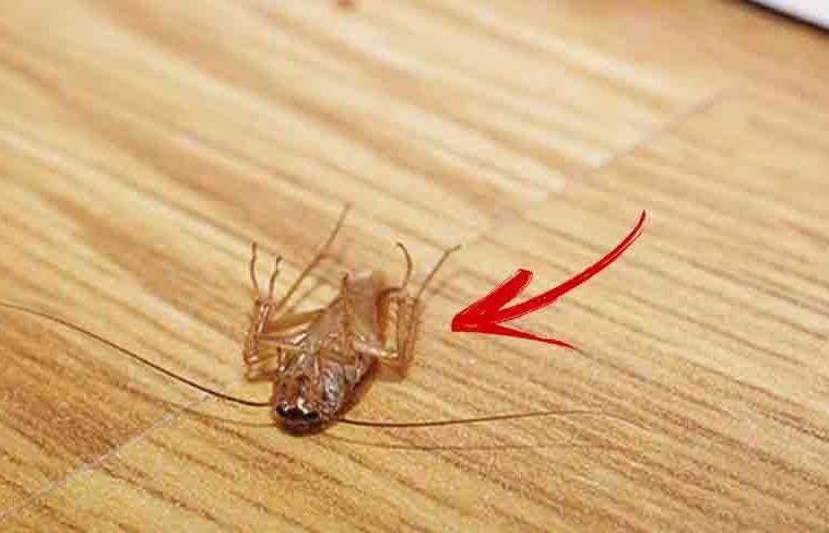 pierderea în greutate la insecte