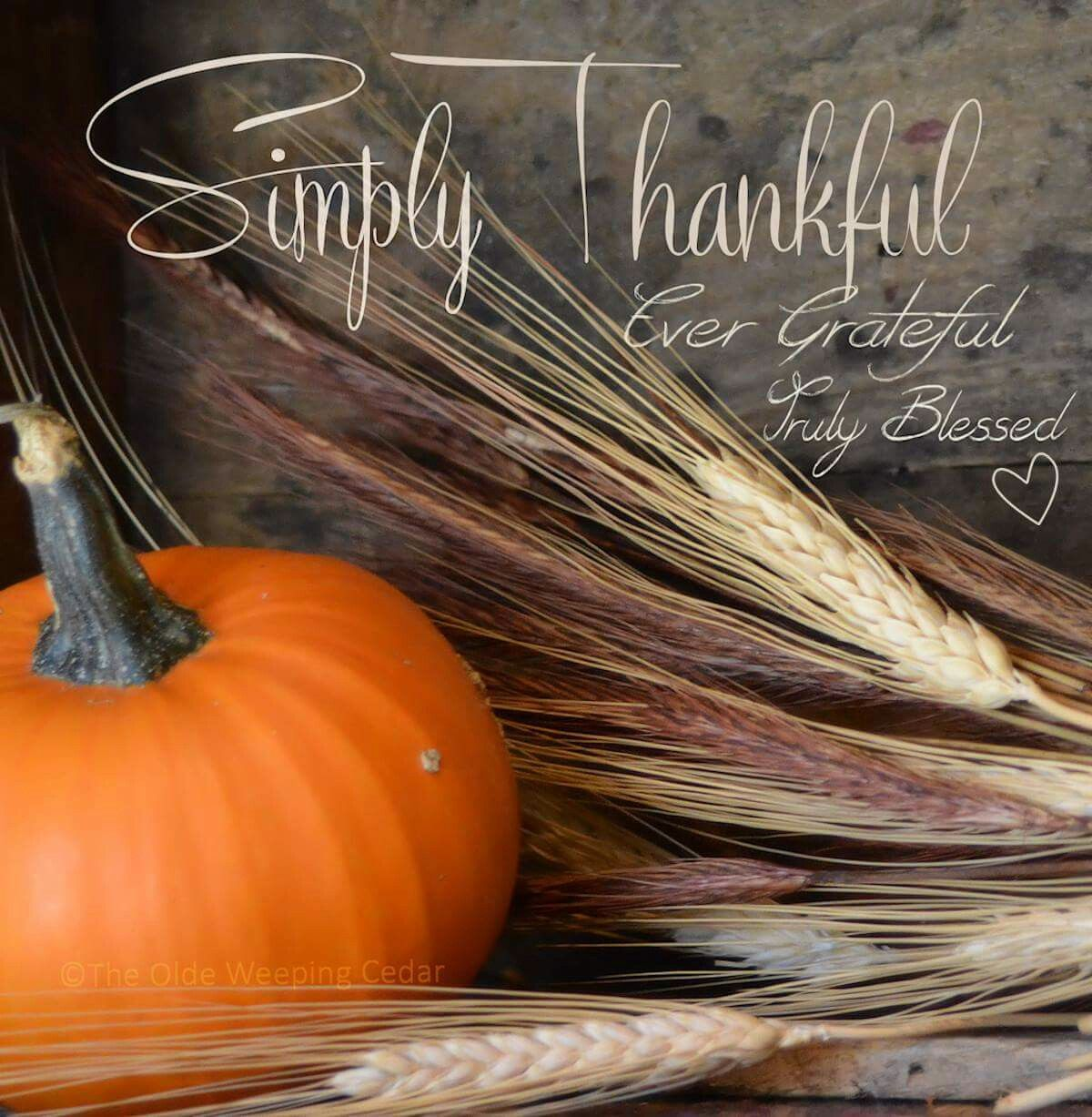 Thankful inspiration quotes pinterest thankful thanksgiving quotes kristyandbryce Gallery