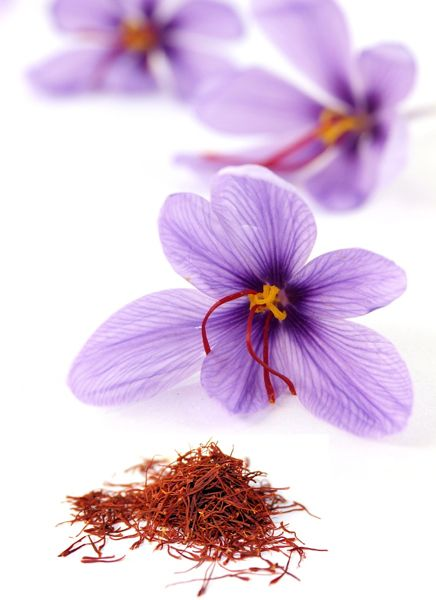 Crocus Sativus Grow Your Own Saffron Saffron Crocus Bulbs