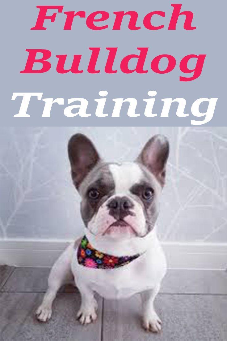French Bulldog Information on Socialization Training