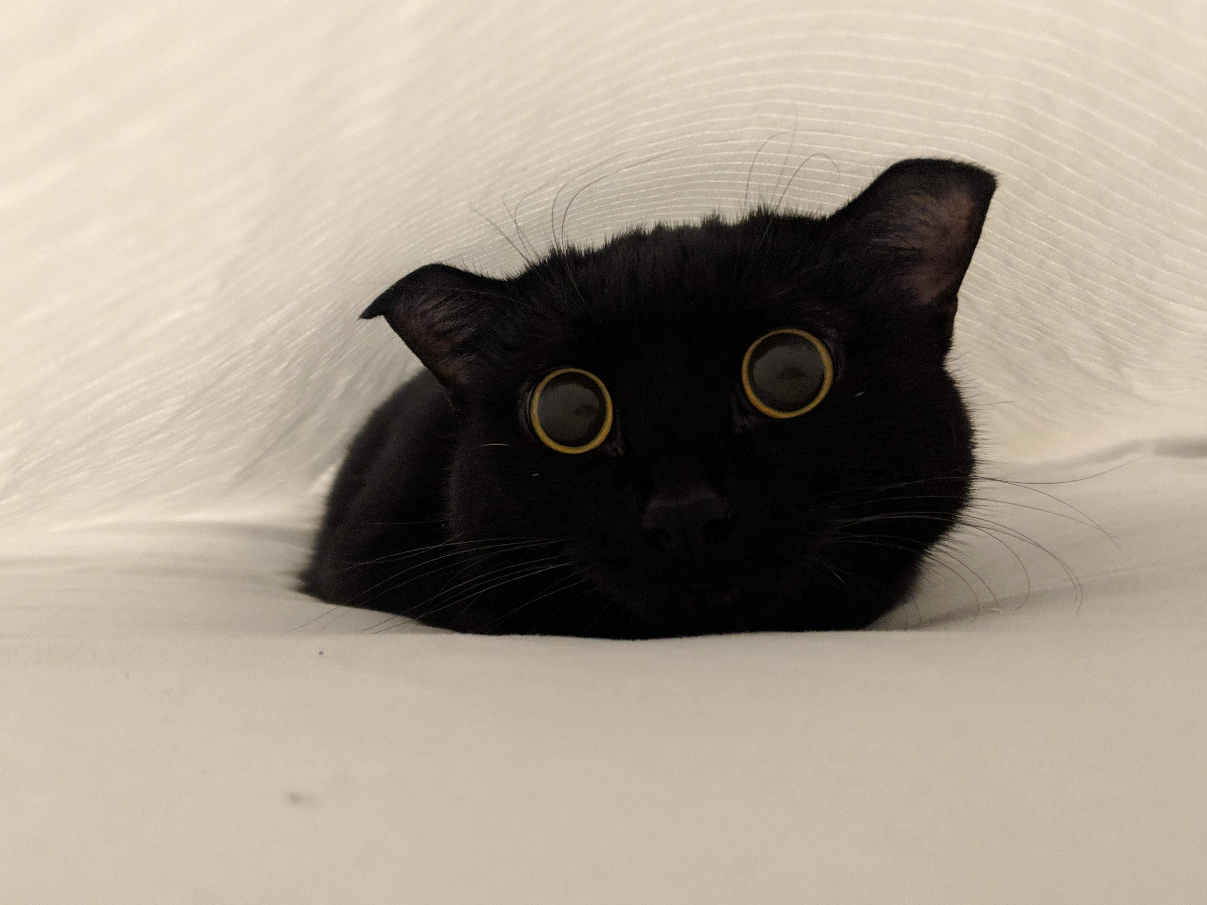 Luna thinks hiding under the sheets while I make the bed