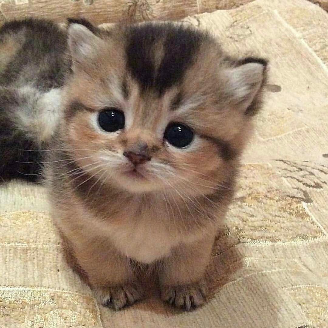 Souvent 20 chatons trop mignons qui vont vous donner envie de caresser  LX42