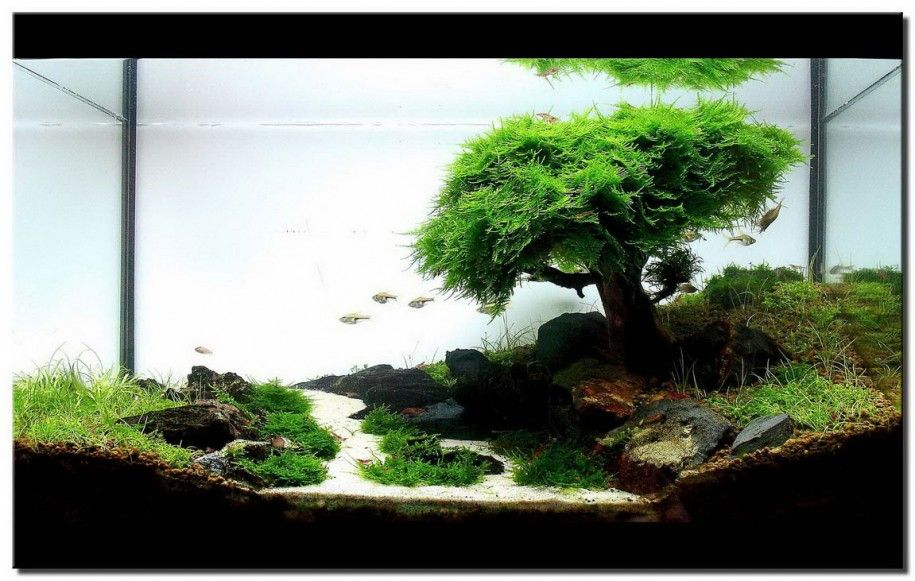 Aquascaping Designs For Your Beautiful Aquarium: White Sand Natural Rocks  Water Plants Small Fish ~