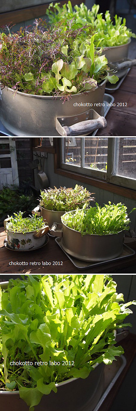 CONTAINER GARDEN :: Lettuce greens planted in old cooking pots. Cute.