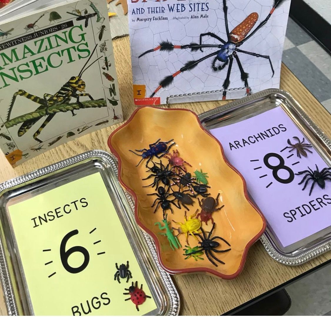 Pin By Jaime On Insects With Images