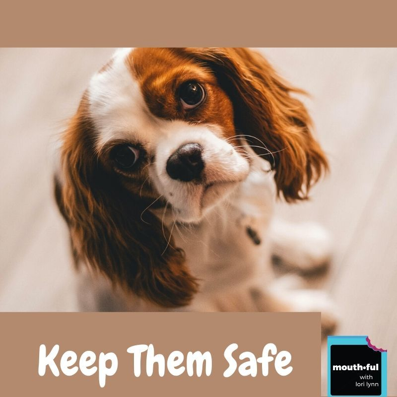 Keep Your Pets Safe Stay At Home Edition In 2020 Pet Safe Stay At Home Starting A Podcast