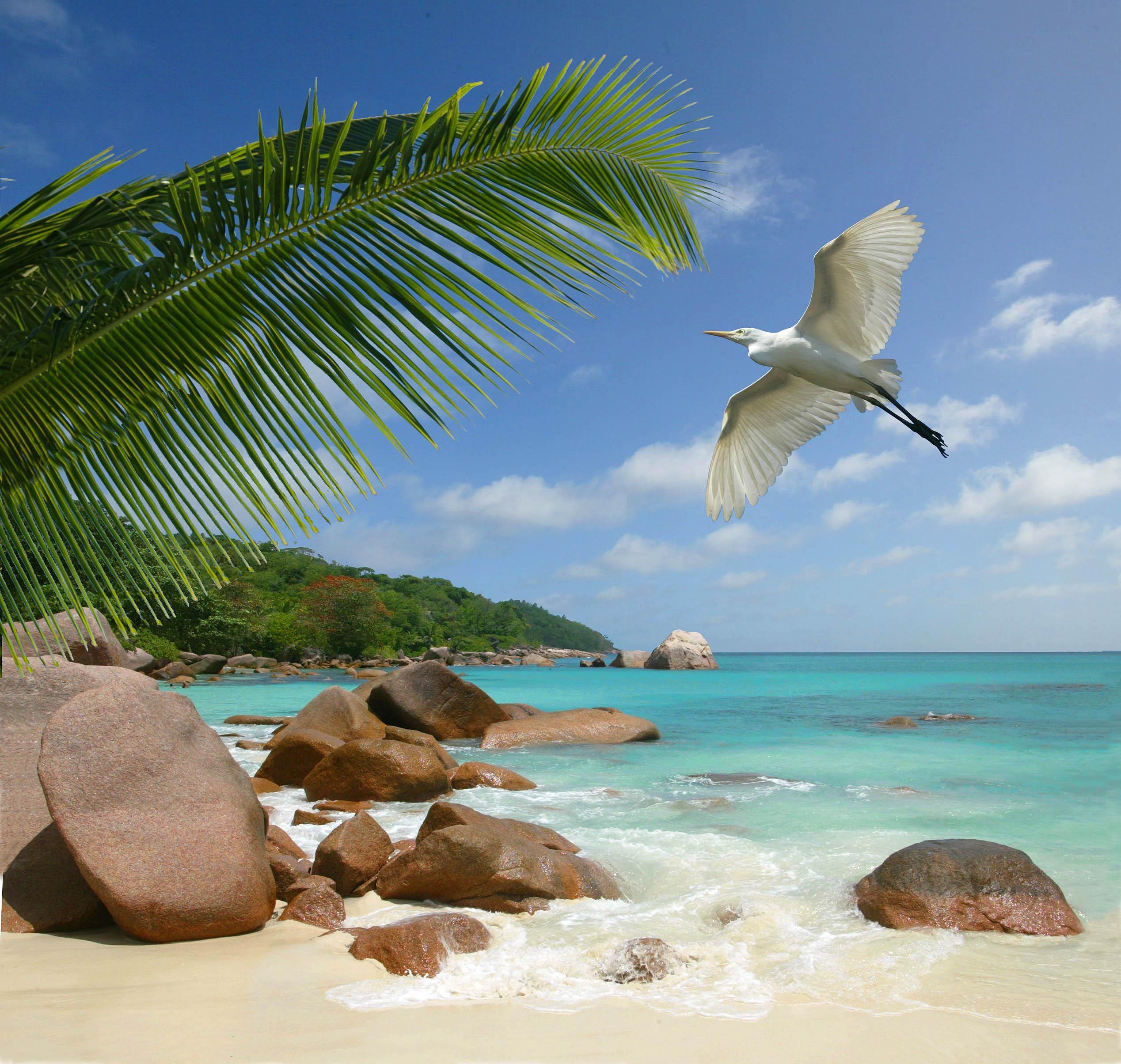 voyage algerie seychelles