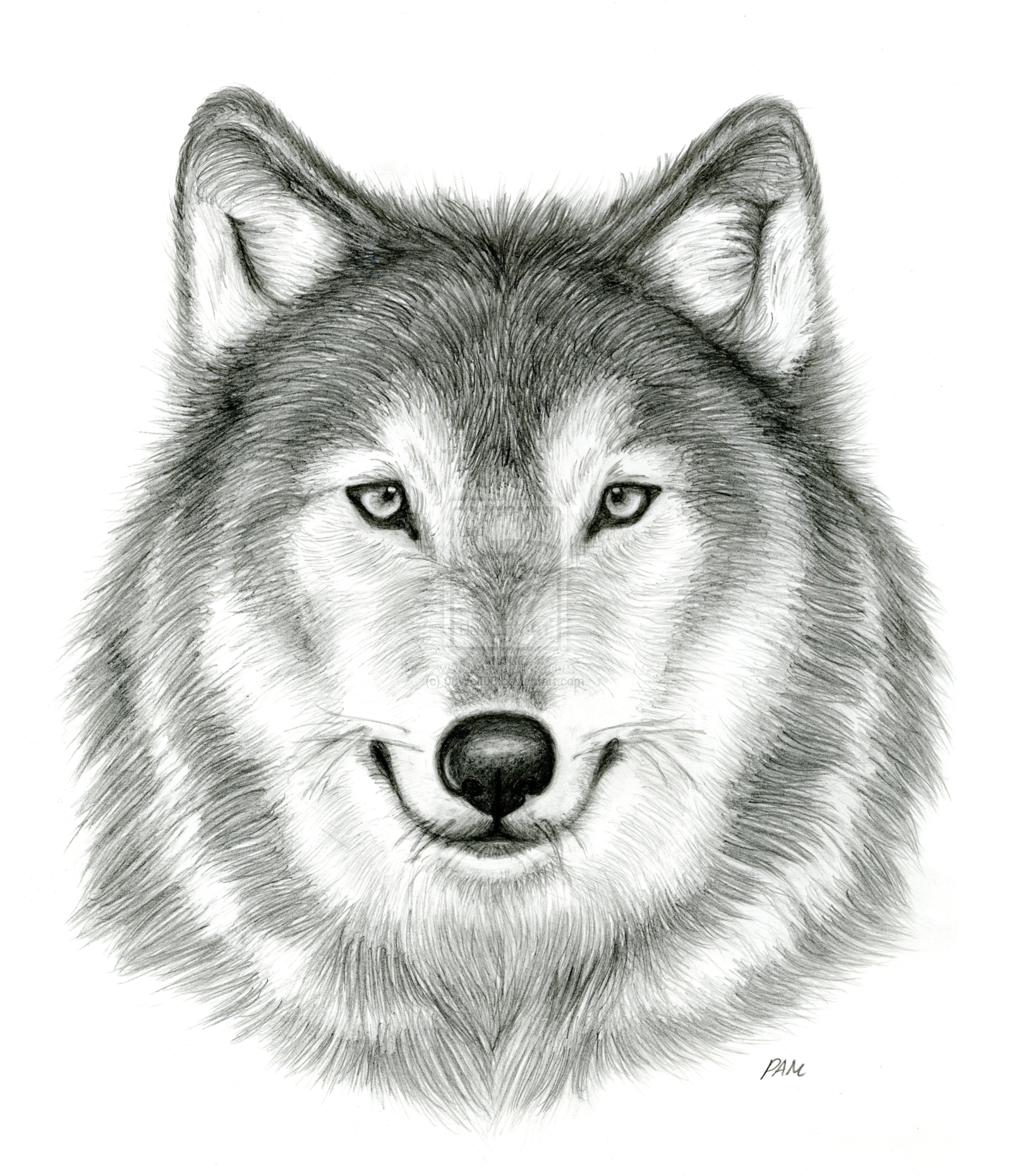 Anime Drawings In Pencil  Google Search Wolf Head Drawingdrawings