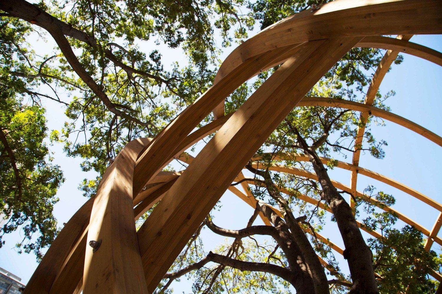 Gallery of Snøhetta and Local Studio Unveil Wooden Archway
