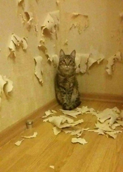 Sometimes No Words Are Necessary Funny Cats Cats Cat Shaming