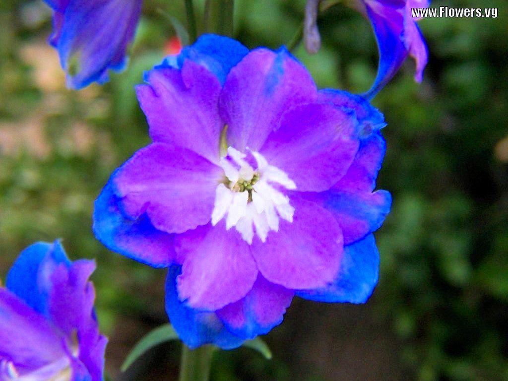 Purple Flowers (id: 45636) |