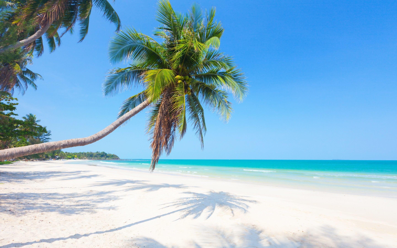 Scarica Sfondi Isole Tropicali Maldives Spiaggia Palma Sabbia
