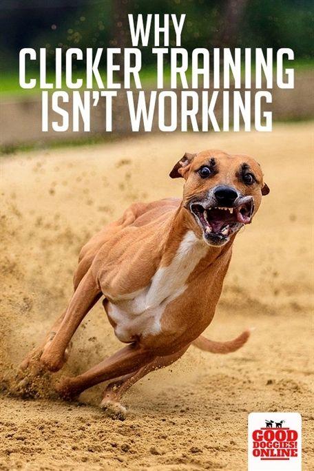 Dog Training Attack On Command Dog Training Vacaville Dog