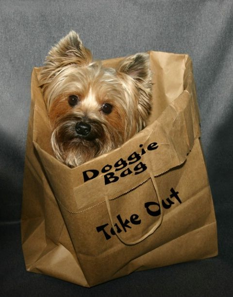 Doggie Bag Wouldn T Mind Getting This At A Restaurant Don T Forget To Also Check Out Our Website At Treatsunleashed Com Buffalony Pets Petsupplies N Doggy
