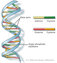 Pin On Dna Day
