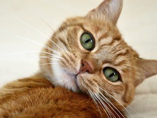 Copyright Free Images Non Copyrighted Photos For Commercial Use Teckler Orange Tabby Cats White Tabby Cat Cats
