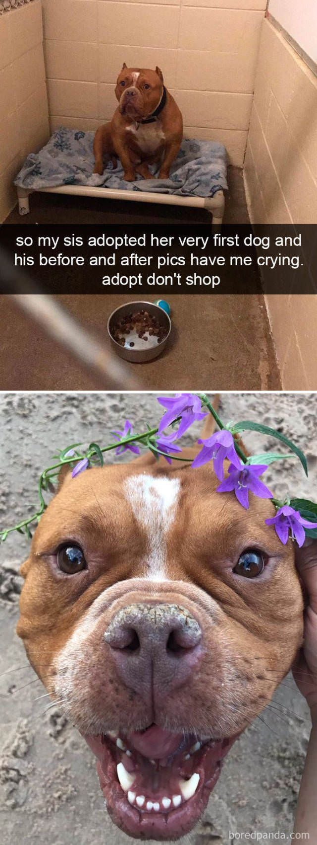 42 Funny Dog Memes Which Will Make You Fall In Love With Them Ladnow Cute Animals Cute Baby Animals Cute Dogs