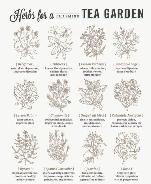 Helpful Guide To Herb Teas Tea Garden Herbs How To Make Tea